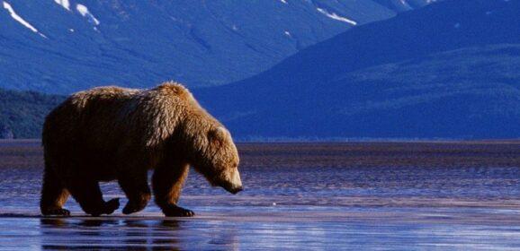 Découvrez l'Alaska avec Princess Cruises. Croisières en famille à partir de €824!