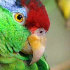 Croisières sur l'Amazone à bord du SeaDream II: Offre 2 pour 1!