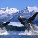Explorez l'Alaska en croisière de luxe